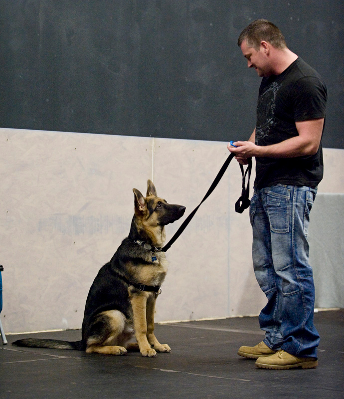 Local Dog Training & Dog Obedience Services in New Castle County, Delaware